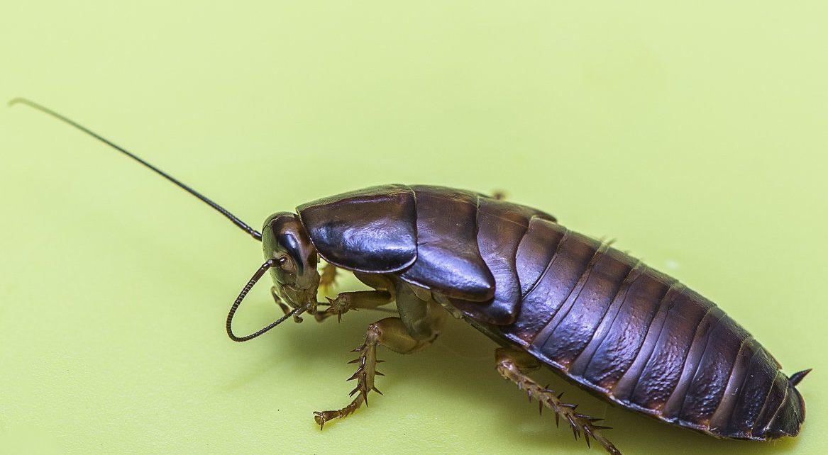 Проверенное средство от тараканов